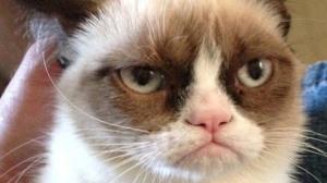 Publiekstrekker Grumpy Cat