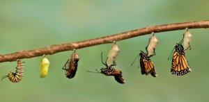 Vlinders ontpoppen